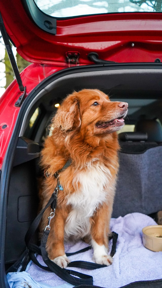 How To Get Dog Hair Out Of Car Interiors